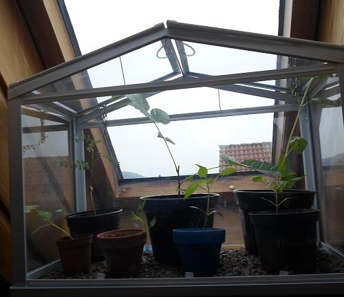 Zimmergewächshaus am Fenster