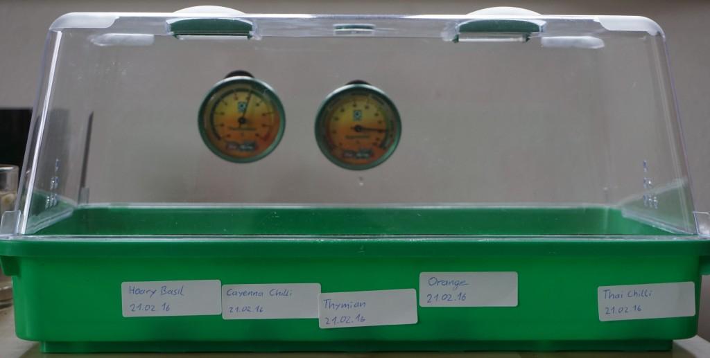 Anzuchtbox mit ausgesäten Orangenkernen